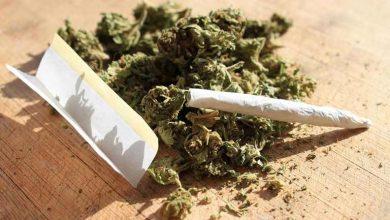 درباره ماده مخدر گل(ماری جوآنا) چه می دانید؟